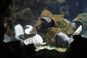 Мурена в аквариуме Родоса