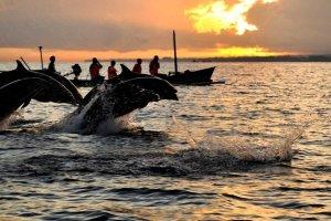 Дельфины в Ловине