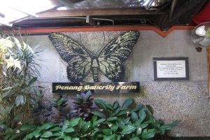 Ферма бабочек